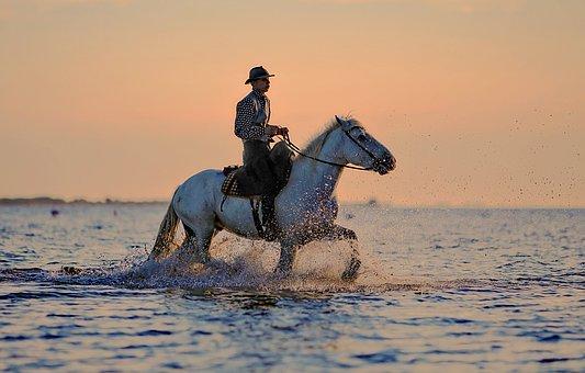 polecane oficerki jeździeckie