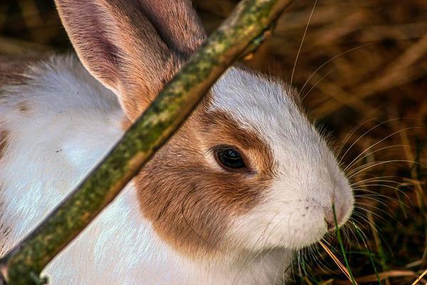 paśnik dla królików materiałowy